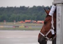 Flug mit 65 Pferden (Bild 1 von 5)