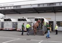Flug mit 65 Pferden (Bild 3 von 5)
